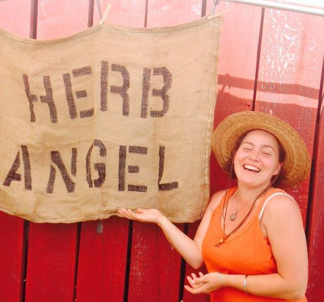 herb angel